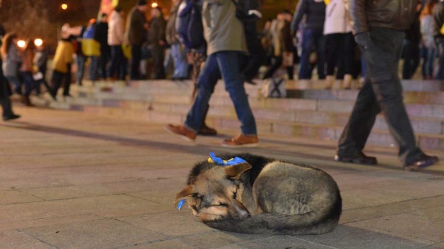 A dog sleeping in Ukraine with an EU flag around its neck